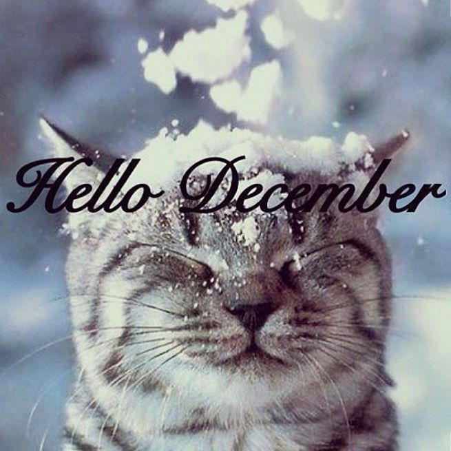 9d3ea017b6ad7db014fb6d9cd7797f74-welcome-december-quotes-hello-december-quotes.jpg